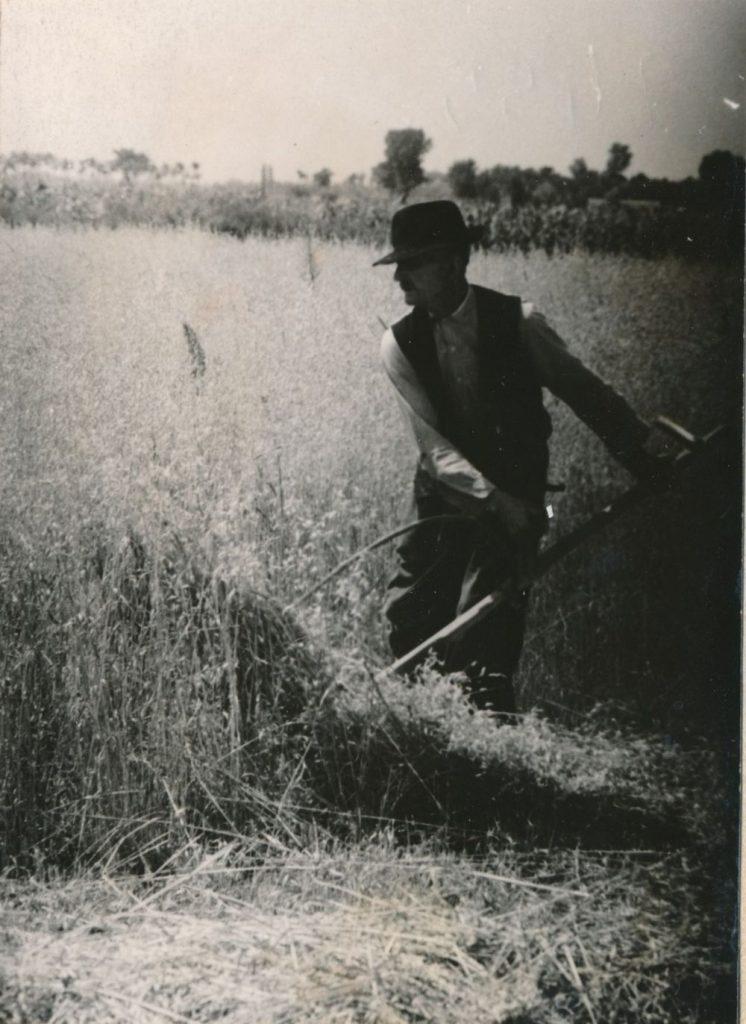 Zab aratása kaszával, 1965, Kiskunhalas (MaNDA)