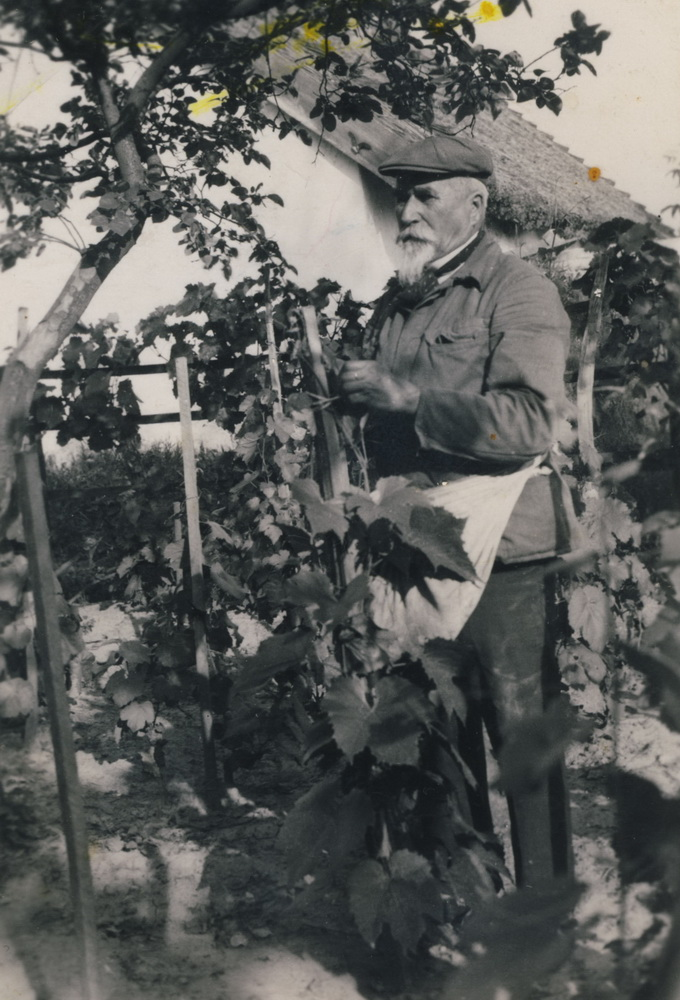 Szőlőkötözés régen (MaNDA)