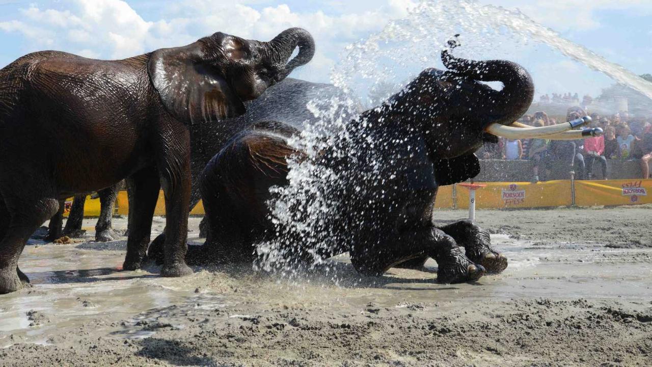 Öt elefánt fürdik majd a lellei strandon