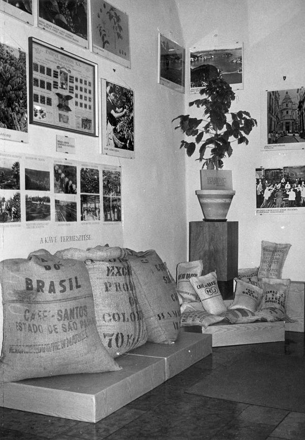 Kávécserje a kereskedelmi kiállításon - Magyar Kereskedelmi és Vendéglátóipari Múzeum, CC BY-NC-ND