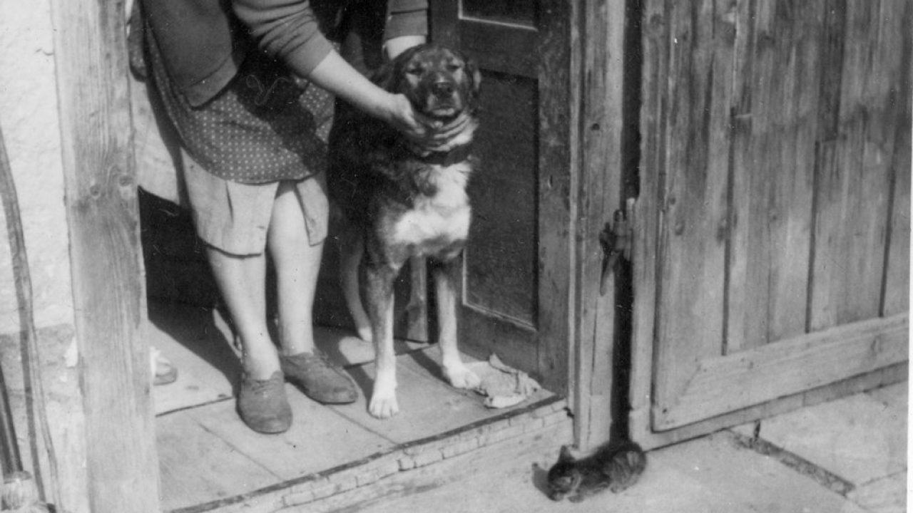 Brit tudósok: a kutya a mai Jordánia területén szegődött az ember mellé