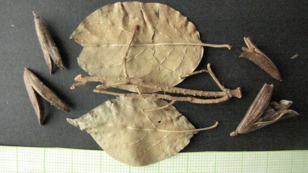 Termés- maggyűjtemény - Kuny Domokos Múzeum, CC BY