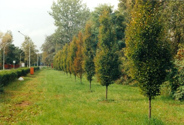 szolVárosi fák - Kovács Mihály Zsolt, CC BY-NC-NDnok_0017