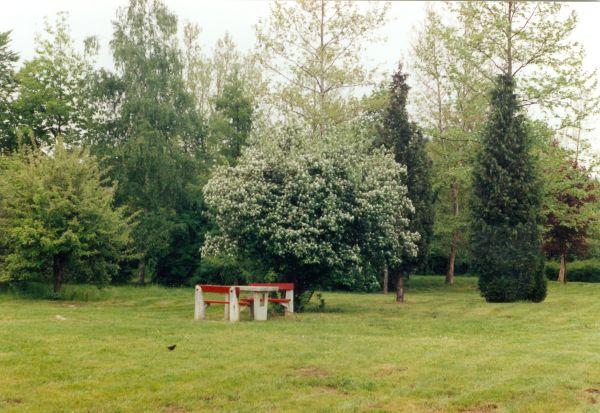 Városi fák - Kovács Mihály Zsolt, CC BY-NC-ND