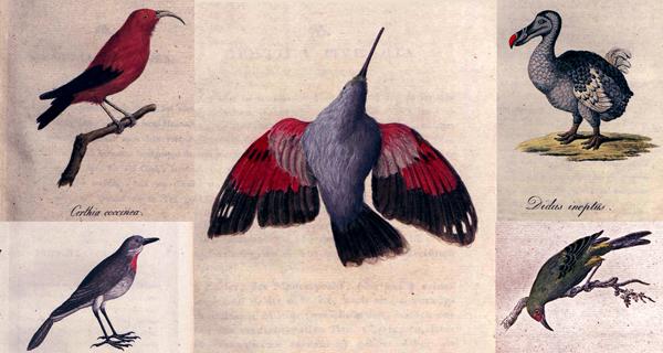 Madarak – könyvillusztráció 1810 - ELTE Egyetemi Könyvtár és Levéltár, PDM