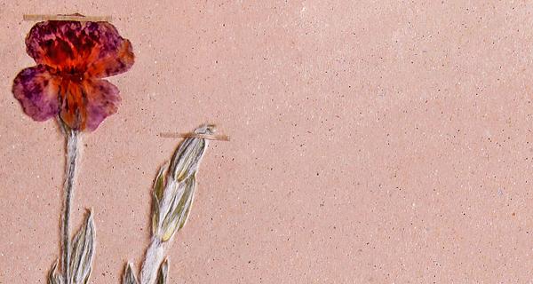 Szárított Bársonyos kakukkszegfű - Rippl Rónai Megyei Hatókörű Városi Múzeum, PDM
