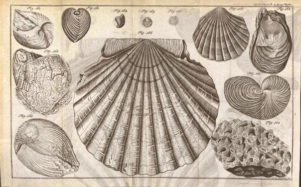 Kagylóhéjak (könyvillusztráció 1777-ből) Natursystem des Mineralreichs - Miskolci Egyetem, PDM