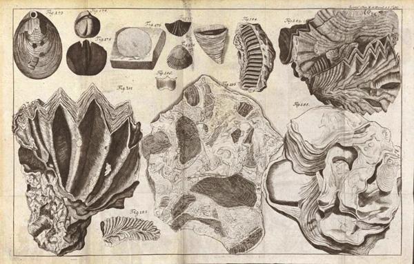 Kagylókövületek - könyvillusztráció 1777-ből, Natursystem des Mineralreichs - Miskolci Egyetem, PDM