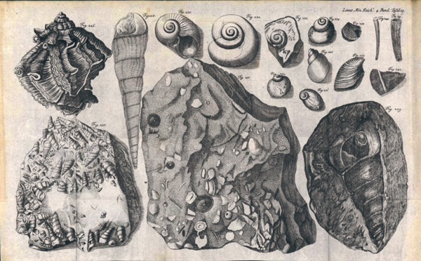 Kövületek - könyvillusztráció 1777-ből, Natursystem des Mineralreichs - Miskolci Egyetem, PDM
