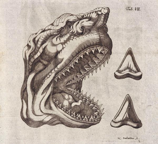 Cápafej - könyvillusztráció 1749-ből - Summi Polyhistoris Godefridi Guilielmi Leibnitii Protogaea - Miskolci Egyetem, PDM