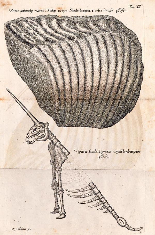 Narválcsontváz-rajz 1749-ből - Miskolci Egyetem, PDM