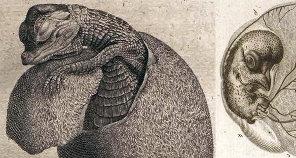 Tojásból épp kikelő krokodil és egy tojásban fejlődő madárfióka (könyvillusztráció, 1810-ből) - Miskolci Egyetem, PDM
